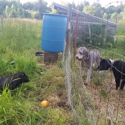 Farm Dogs and the Learning Curve